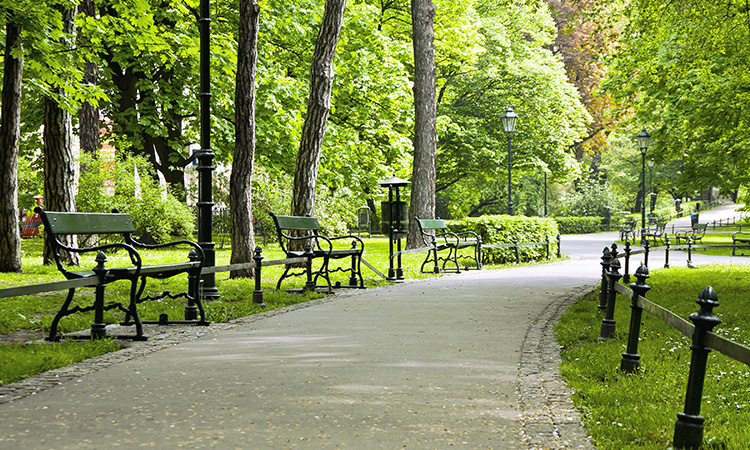Bench in green park with path way in Krakow